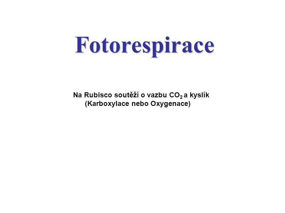 Fotorespirace Na Rubisco soutěží o vazbu CO 2 a kyslík (Karboxylace nebo Oxygenace)