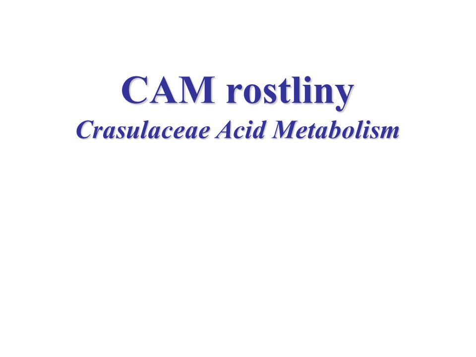 CAM rostliny Crasulaceae Acid Metabolism