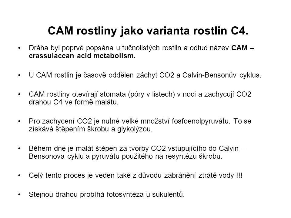 CAM rostliny jako varianta rostlin C4.