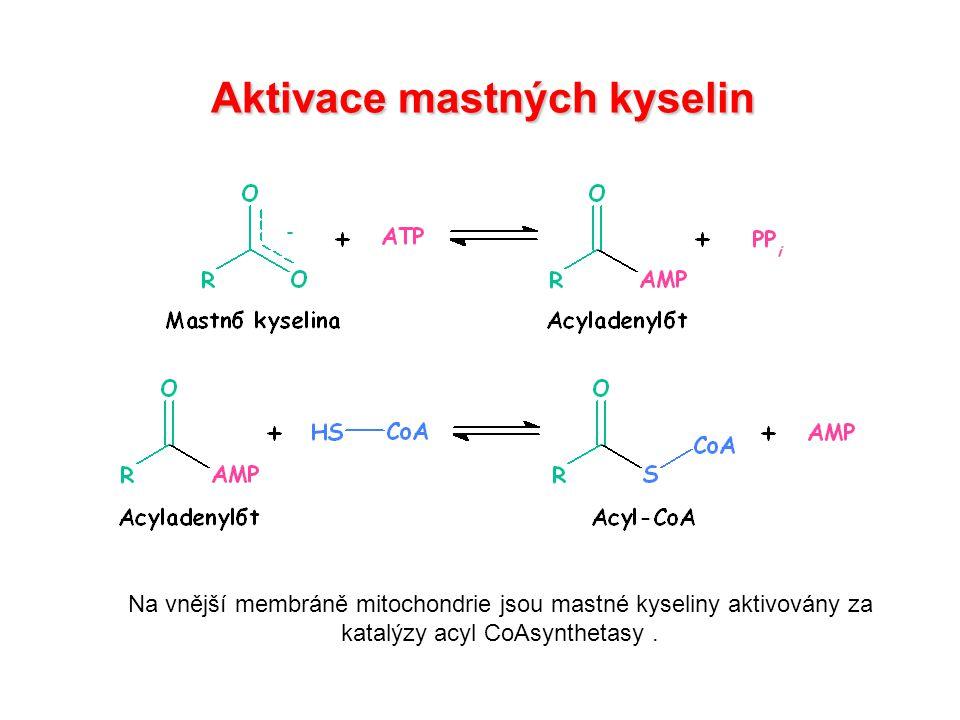 Aktivace mastných kyselin Na vnější membráně mitochondrie jsou mastné kyseliny aktivovány za katalýzy acyl CoAsynthetasy.