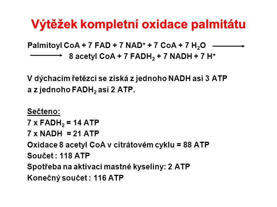Výtěžek kompletní oxidace palmitátu Palmitoyl CoA + 7 FAD + 7 NAD + + 7 CoA + 7 H 2 O 8 acetyl CoA + 7 FADH 2 + 7 NADH + 7 H + V dýchacím řetězci se získá z jednoho NADH asi 3 ATP a z jednoho FADH 2 asi 2 ATP.