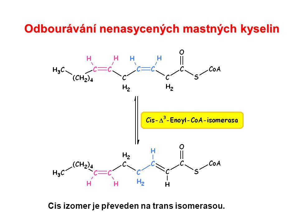 Odbourávání nenasycených mastných kyselin Cis izomer je převeden na trans isomerasou.
