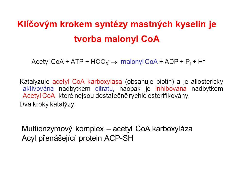 Klíčovým krokem syntézy mastných kyselin je tvorba malonyl CoA Acetyl CoA + ATP + HCO 3 -  malonyl CoA + ADP + P i + H + Katalyzuje acetyl CoA karboxylasa (obsahuje biotin) a je allostericky aktivována nadbytkem citrátu, naopak je inhibována nadbytkem Acetyl CoA, které nejsou dostatečně rychle esterifikovány.