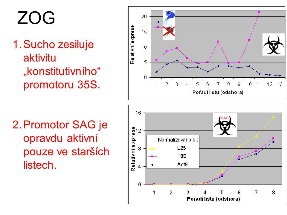 prolin oxygenáza-dehydrogenáza indukován cytokininy 1.Gen cig1 je aktivní ve starších listech.