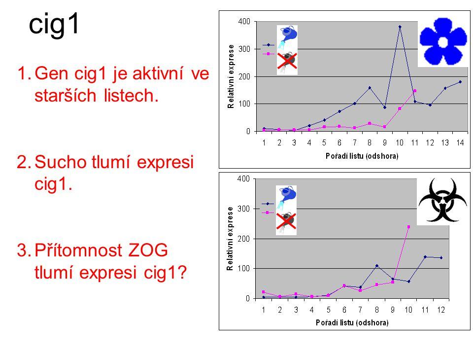 Sucho tlumí expresi cig1.cig1 Přítomnost ZOG tlumí expresi cig1.