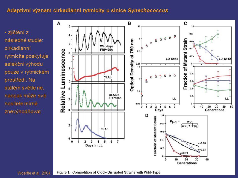 Adaptivní význam cirkadiánní rytmicity u sinice Synechococcus Woelfle et al.