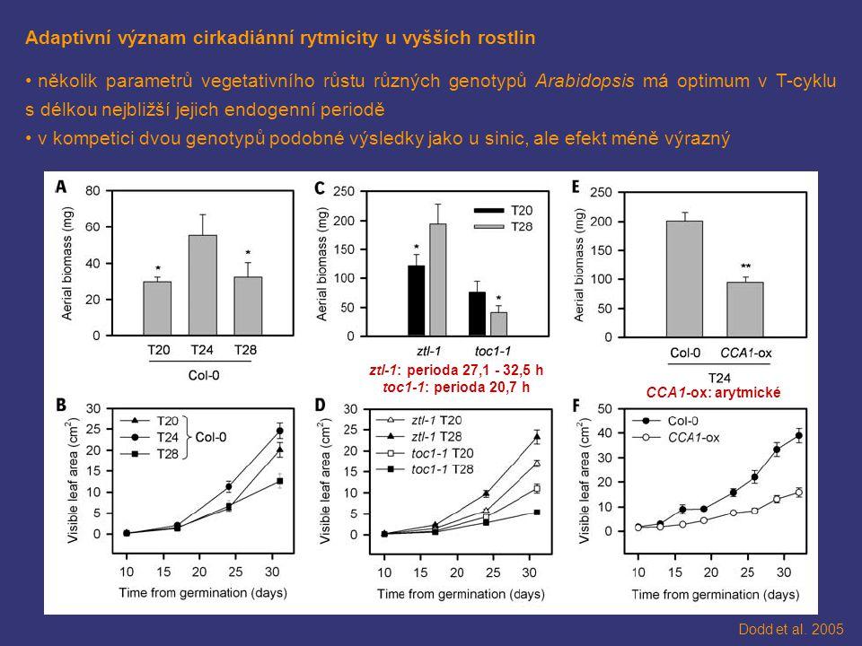 Adaptivní význam cirkadiánní rytmicity u vyšších rostlin několik parametrů vegetativního růstu různých genotypů Arabidopsis má optimum v T-cyklu s délkou nejbližší jejich endogenní periodě v kompetici dvou genotypů podobné výsledky jako u sinic, ale efekt méně výrazný Dodd et al.