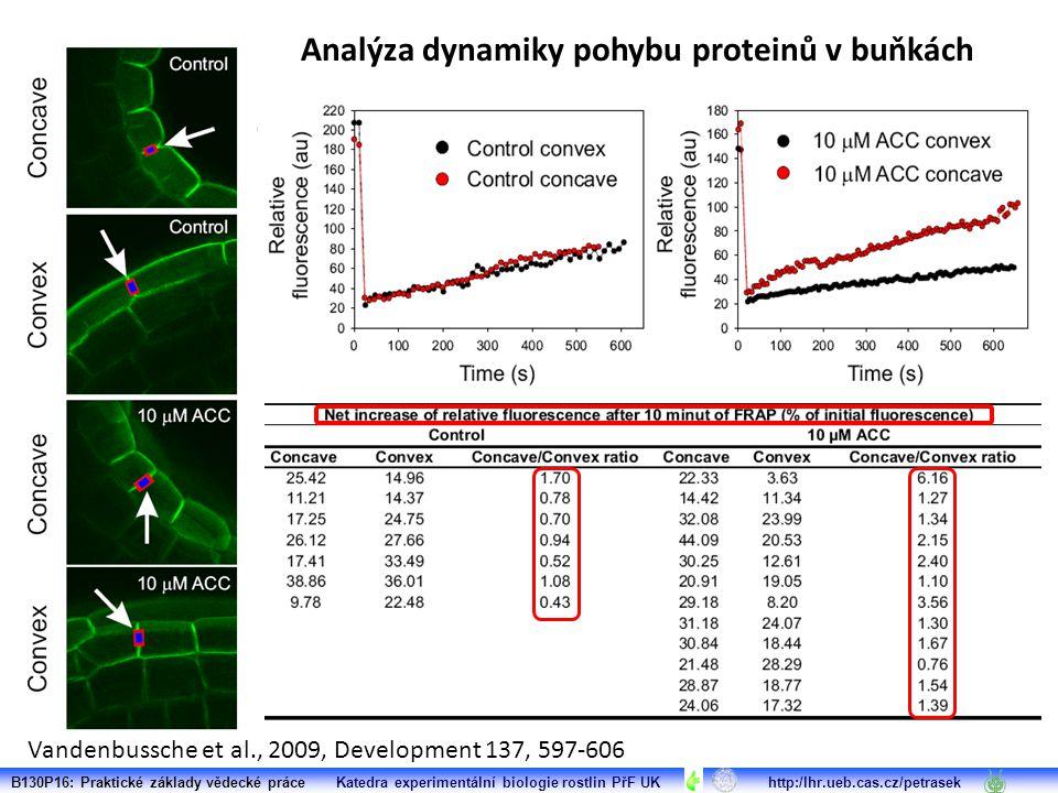 Vandenbussche et al., 2009, Development 137, 597-606 B130P16: Praktické základy vědecké práce Katedra experimentální biologie rostlin PřF UK http:/lhr.ueb.cas.cz/petrasek Analýza dynamiky pohybu proteinů v buňkách