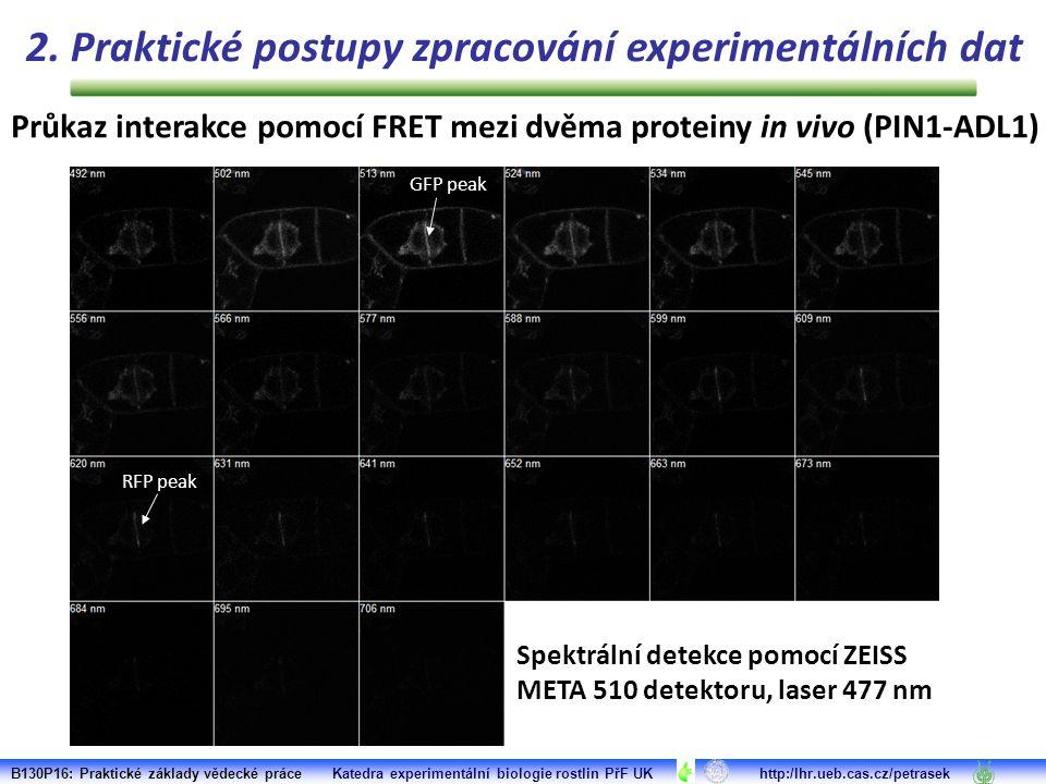 Spektrální detekce pomocí ZEISS META 510 detektoru, laser 477 nm GFP peak RFP peak Průkaz interakce pomocí FRET mezi dvěma proteiny in vivo (PIN1-ADL1