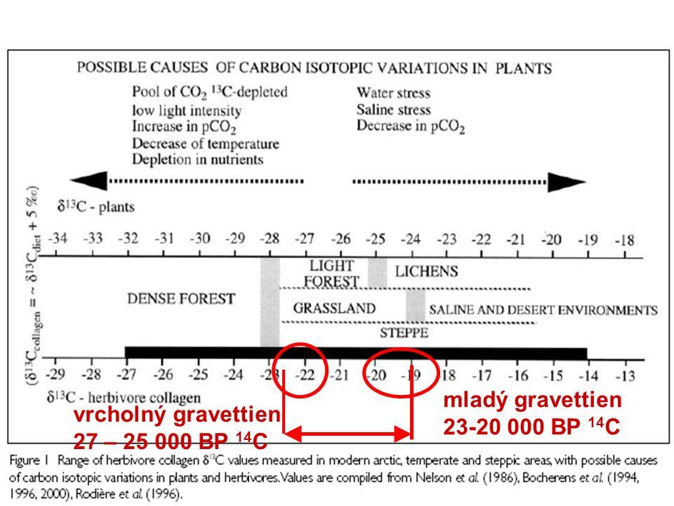 mladý gravettien 23-20 000 BP 14 C vrcholný gravettien 27 – 25 000 BP 14 C