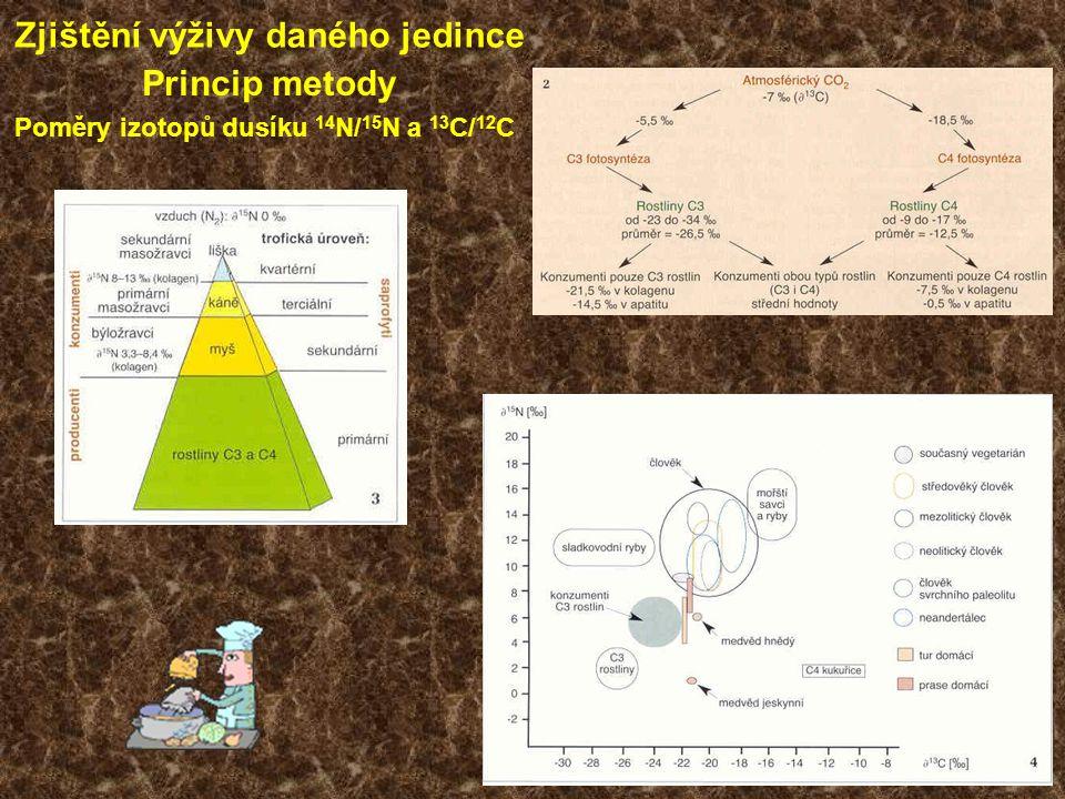 Poměry izotopů dusíku 14 N/ 15 N a 13 C/ 12 C Zjištění výživy daného jedince Princip metody