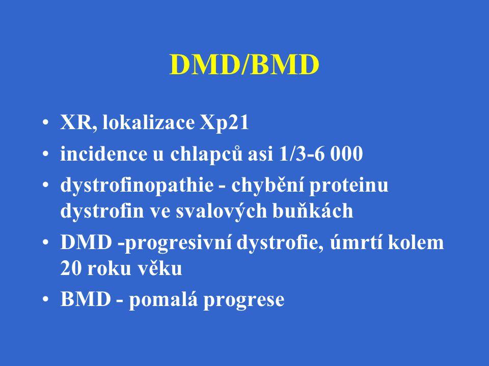 DMD/BMD XR, lokalizace Xp21 incidence u chlapců asi 1/3-6 000 dystrofinopathie - chybění proteinu dystrofin ve svalových buňkách DMD -progresivní dyst
