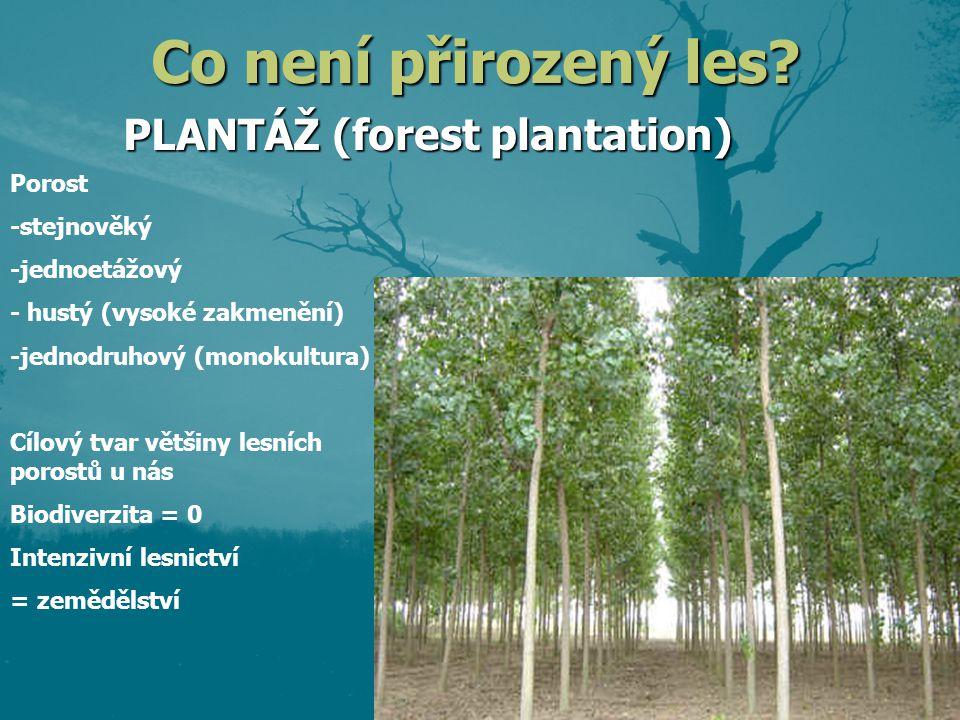 PLANTÁŽ (forest plantation) Porost -stejnověký -jednoetážový - hustý (vysoké zakmenění) -jednodruhový (monokultura) Cílový tvar většiny lesních porostů u nás Biodiverzita = 0 Intenzivní lesnictví = zemědělství Co není přirozený les?