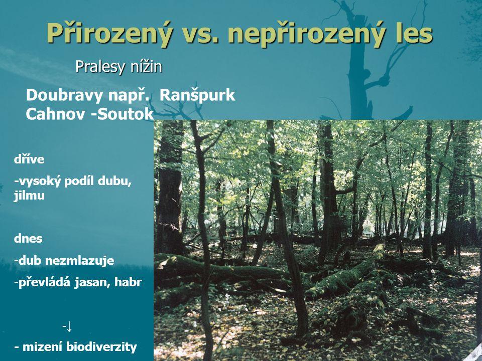 Přirozený vs. nepřirozený les Pralesy nížin dříve -vysoký podíl dubu, jilmu dnes -dub nezmlazuje -převládá jasan, habr -↓ - mizení biodiverzity Doubra