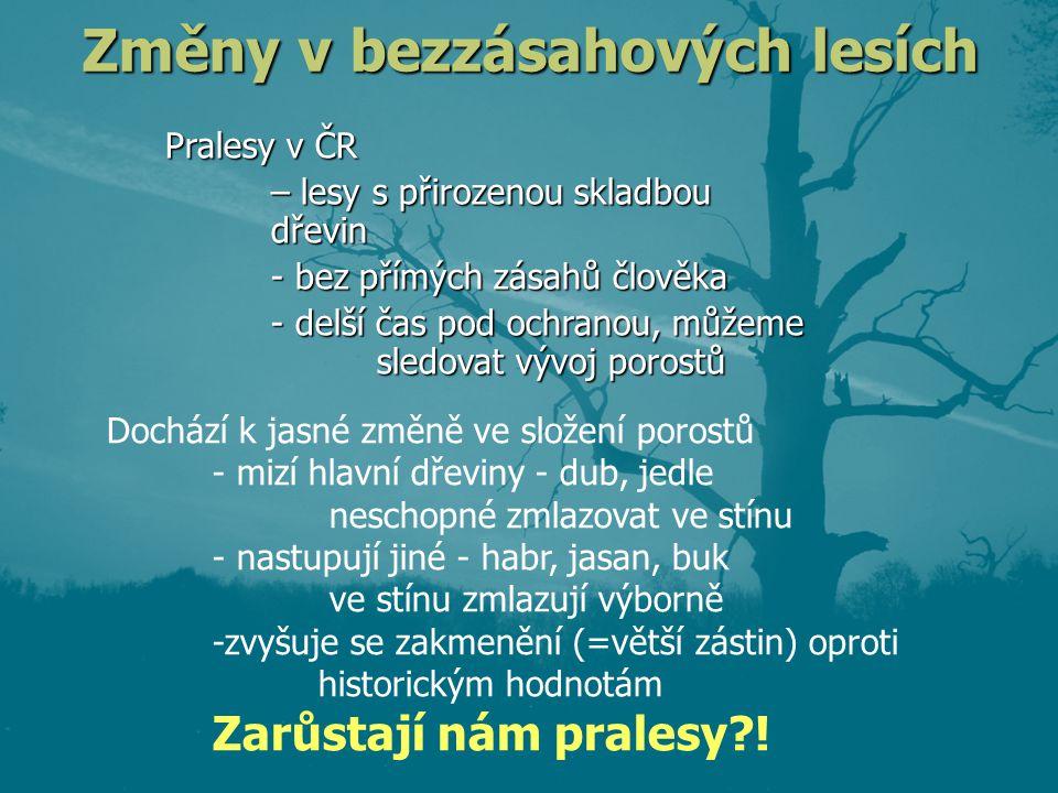 Změny v bezzásahových lesích Pralesy v ČR – lesy s přirozenou skladbou dřevin - bez přímých zásahů člověka - delší čas pod ochranou, můžeme sledovat vývoj porostů Dochází k jasné změně ve složení porostů - mizí hlavní dřeviny - dub, jedle neschopné zmlazovat ve stínu - nastupují jiné - habr, jasan, buk ve stínu zmlazují výborně -zvyšuje se zakmenění (=větší zástin) oproti historickým hodnotám Zarůstají nám pralesy?!