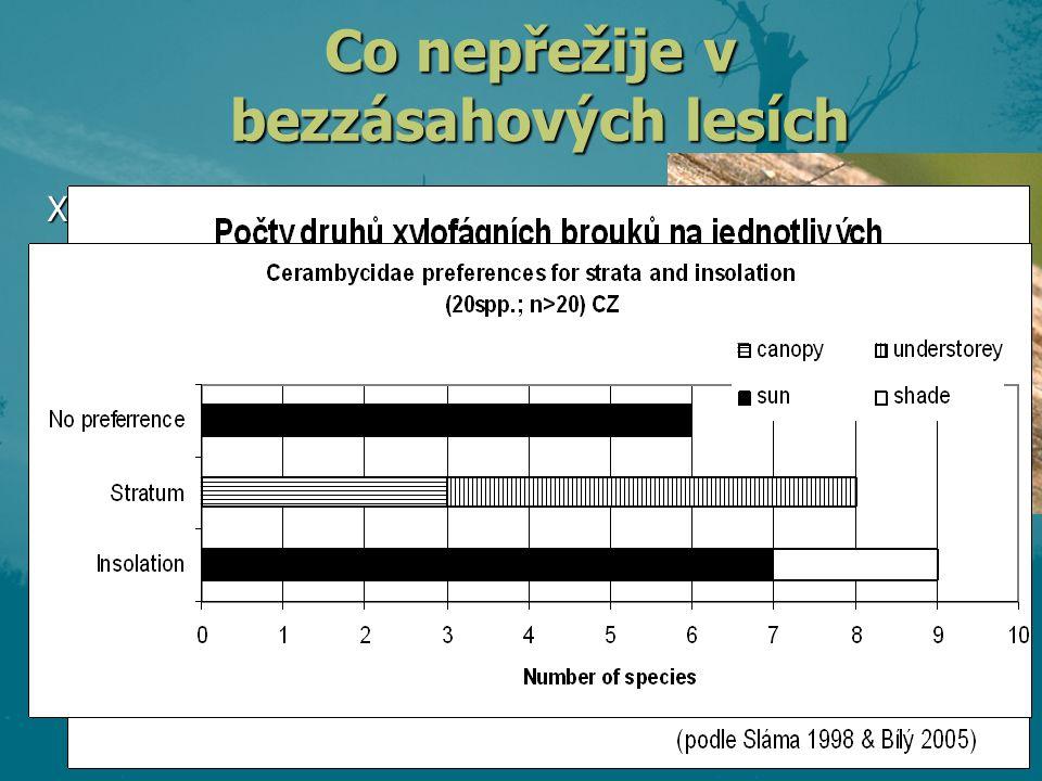 """Xylofágní hmyz – tesařík obrovský - páchník hnědý - krasec Eurythyrea quercus většina tesaříků a krasců potřebuje osluněné dřevo, často větších průměrů = nežijí v korunách a v """"pralesích nejsou dub a jilm hostí více druhů než habr a jasan (a mnohem více specialistů) dub a jilm hostí více druhů než habr a jasan (a mnohem více specialistů) Co nepřežije v bezzásahových lesích"""