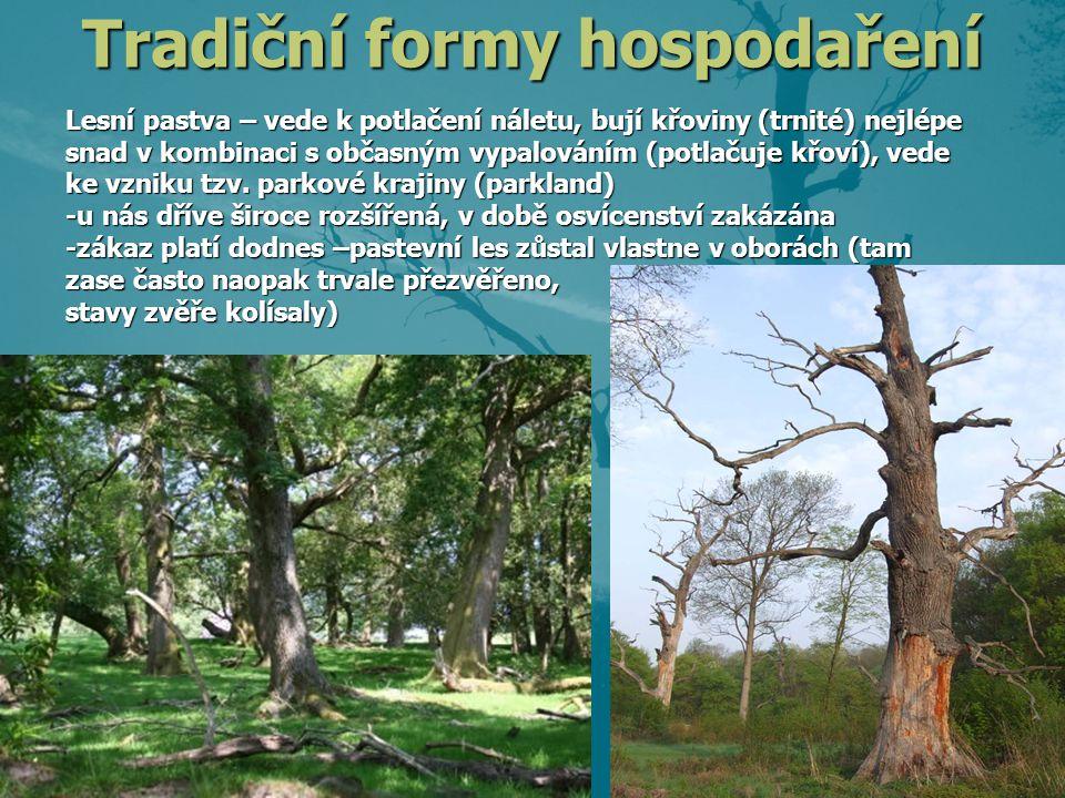 Lesní pastva – vede k potlačení náletu, bují křoviny (trnité) nejlépe snad v kombinaci s občasným vypalováním (potlačujekřoví), vede ke vzniku tzv. pa