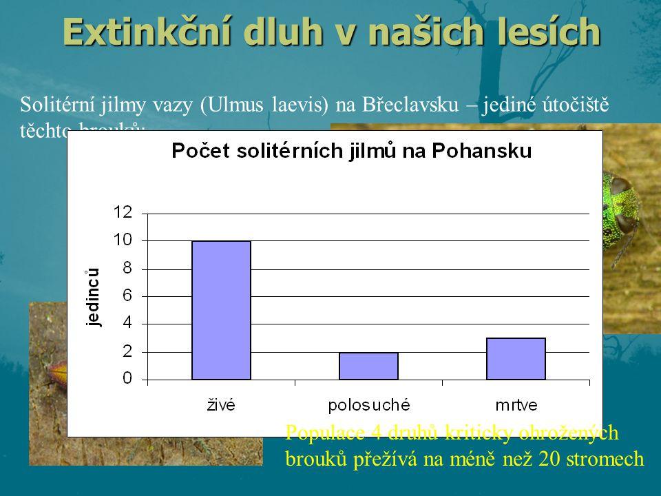 Extinkční dluh v našich lesích Solitérní jilmy vazy (Ulmus laevis) na Břeclavsku – jediné útočiště těchto brouků: krasec Scintilatrix mirifica krasec Anthaxia hackeri krasec Anthaxia tuerki krasec Anthaxia deaurata -plus těžiště výskytu dalších dvou jilmových specialistů Populace 4 druhů kriticky ohrožených brouků přežívá na méně než 20 stromech