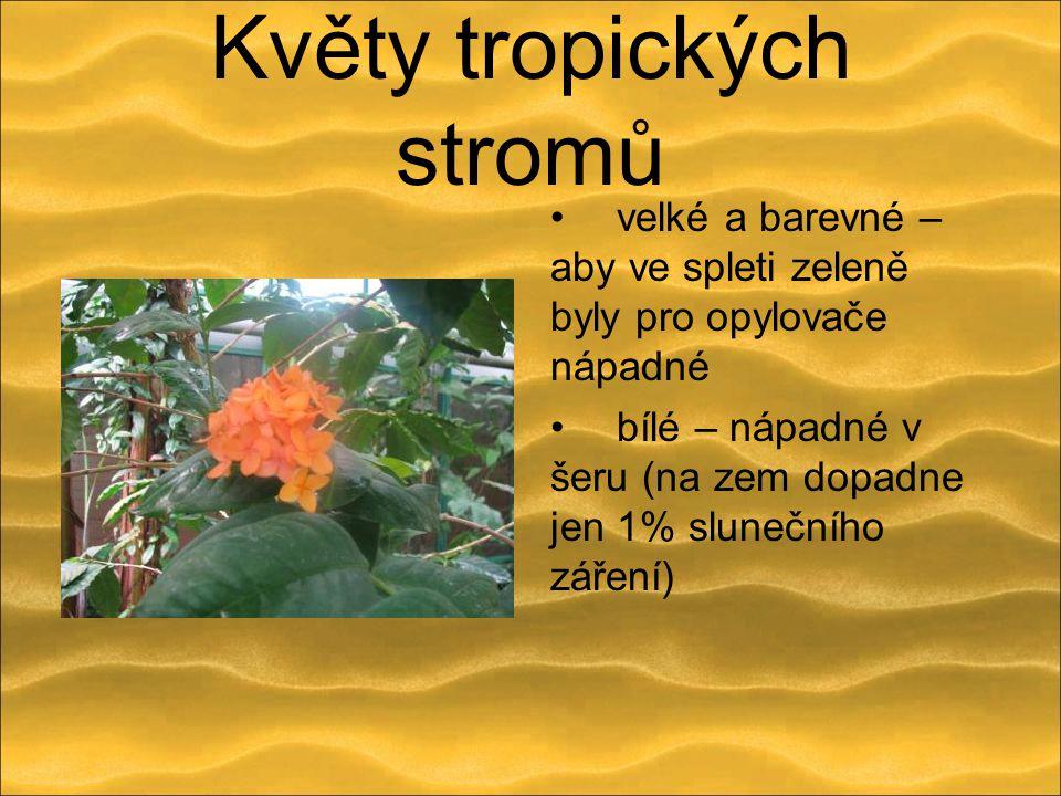 Květy tropických stromů velké a barevné – aby ve spleti zeleně byly pro opylovače nápadné bílé – nápadné v šeru (na zem dopadne jen 1% slunečního záře