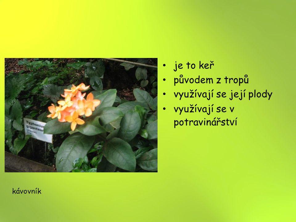 je to keř původem z tropů využívají se její plody využívají se v potravinářs tví kávovník