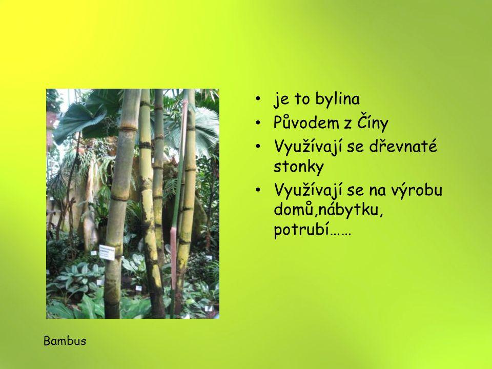 je to bylina Původem z Číny Využívají se dřevnaté stonky Využívají se na výrobu domů,nábytku, potrubí…… Bambus