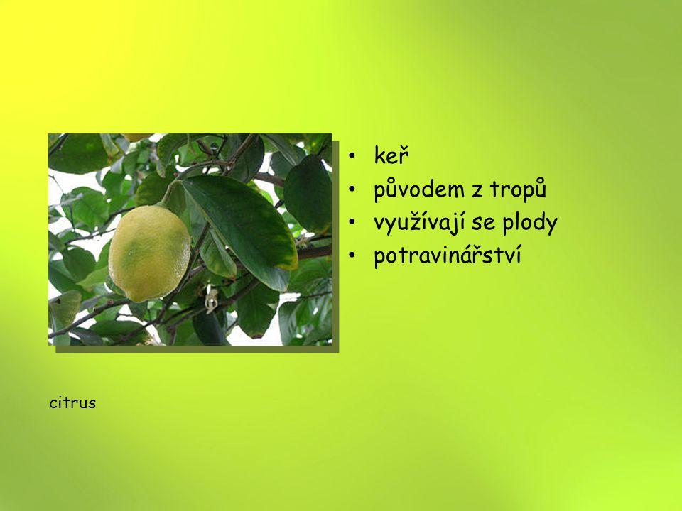 keř původem z tropů využívají se plody potravinářství citrus