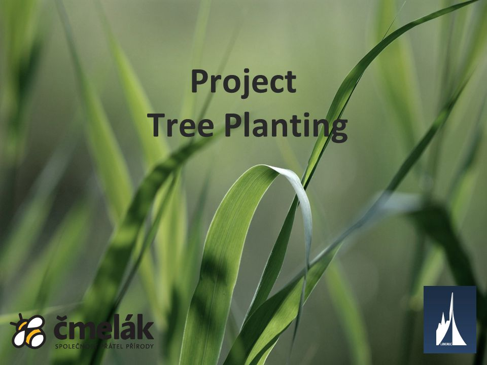 Project Tree Planting