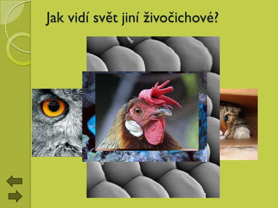 Jak vidí svět jiní živočichové?