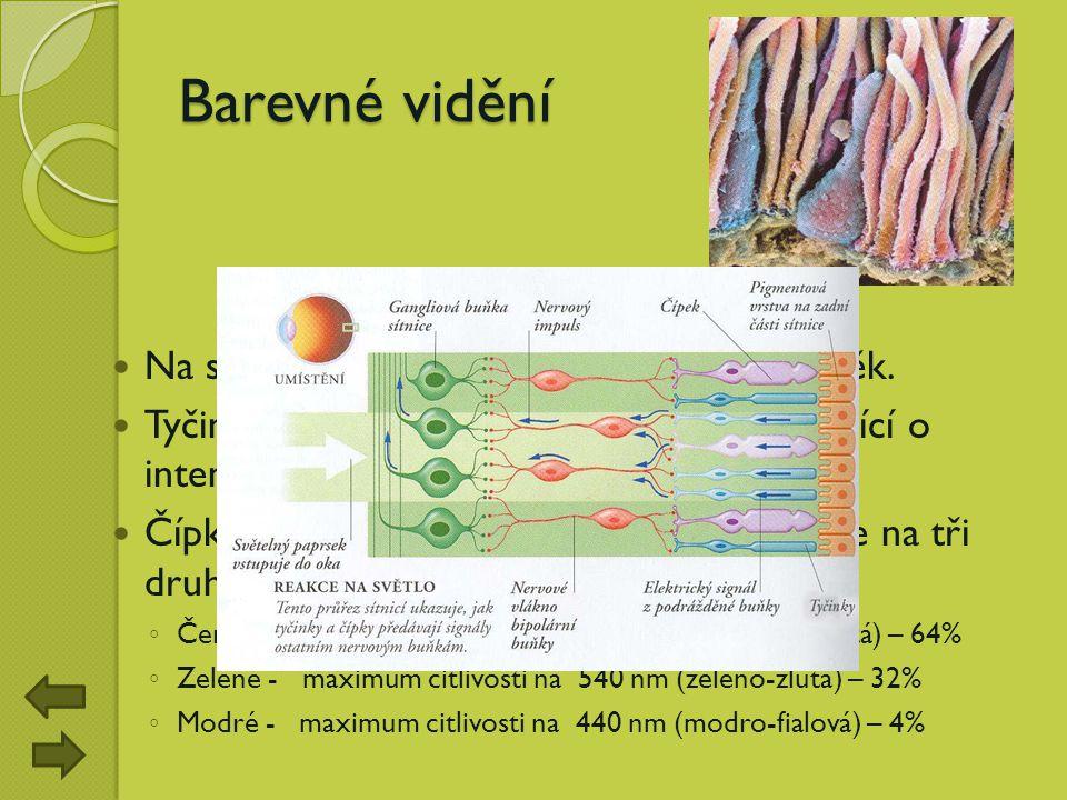 Barevné vidění Na sítnici jsou dva druhy světločivých buněk. Tyčinky vytvářejí černobílý obraz vypovídající o intenzitě jasu. Čípky zaznamenávají barv