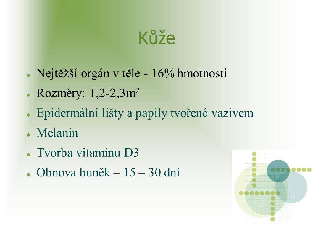 Kůže Nejtěžší orgán v těle - 16% hmotnosti Rozměry: 1,2-2,3m 2 Epidermální lišty a papily tvořené vazivem Melanin Tvorba vitamínu D3 Obnova buněk – 15