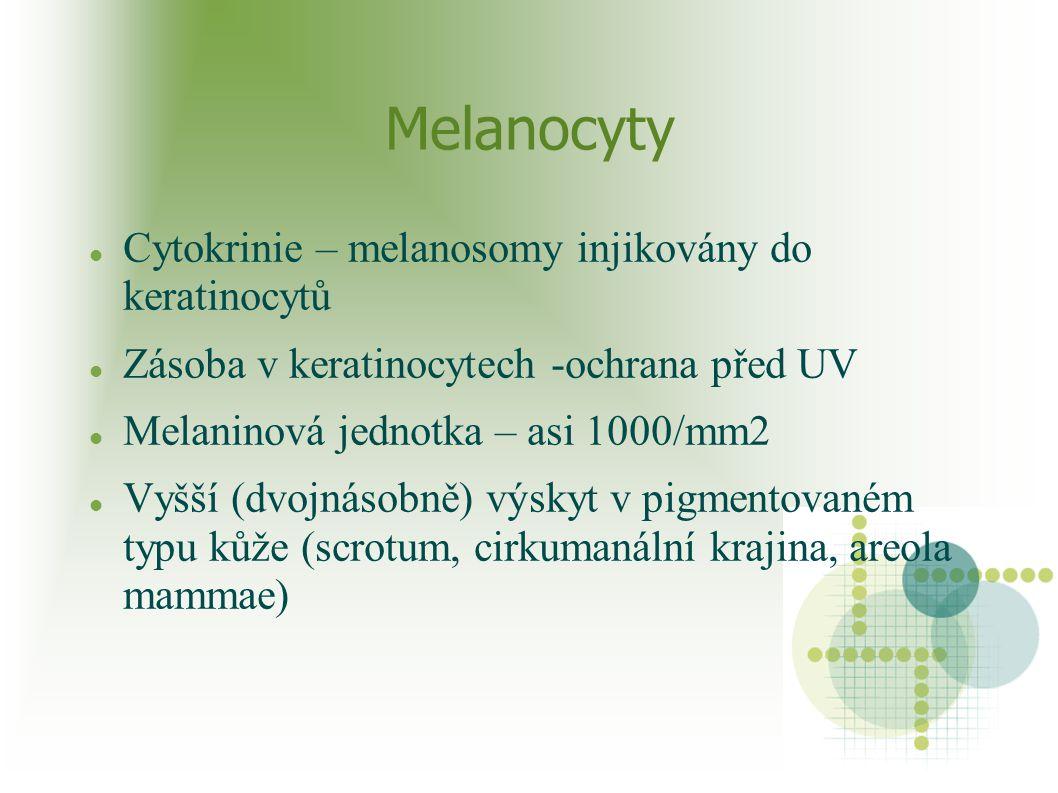 Melanocyty Cytokrinie – melanosomy injikovány do keratinocytů Zásoba v keratinocytech -ochrana před UV Melaninová jednotka – asi 1000/mm2 Vyšší (dvojn