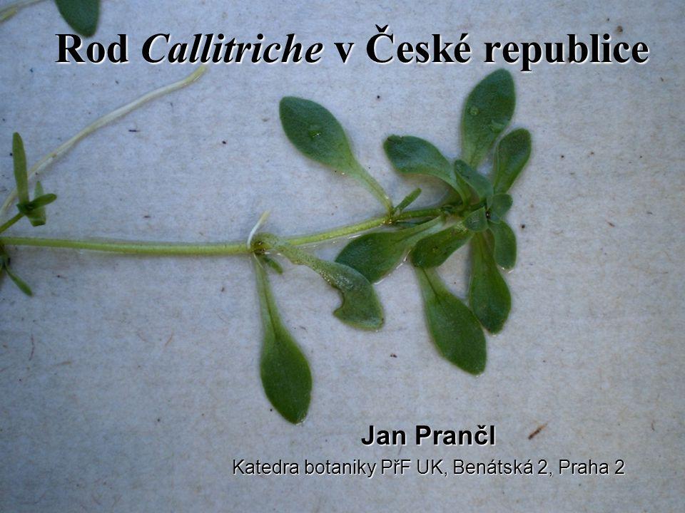 Rod Callitriche v České republice Jan Prančl Katedra botaniky PřF UK, Benátská 2, Praha 2