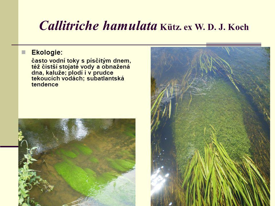 Callitriche hamulata Kütz. ex W. D. J. Koch Ekologie: často vodní toky s písčitým dnem, též čistší stojaté vody a obnažená dna, kaluže; plodí i v prud