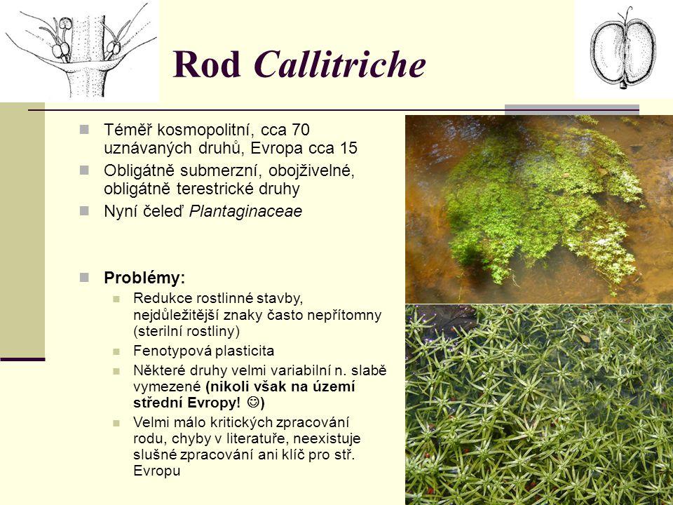 Rod Callitriche Téměř kosmopolitní, cca 70 uznávaných druhů, Evropa cca 15 Obligátně submerzní, obojživelné, obligátně terestrické druhy Nyní čeleď Pl