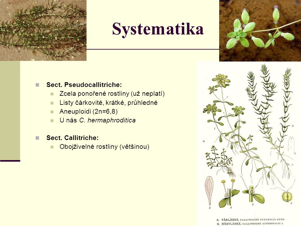 Systematika Sect.