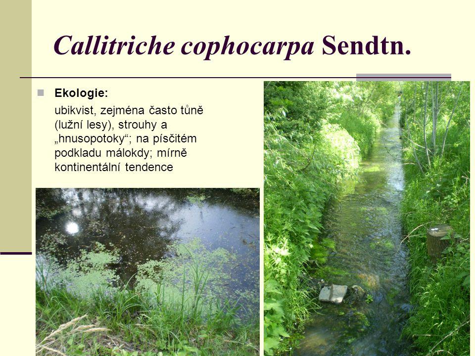 """Ekologie: ubikvist, zejména často tůně (lužní lesy), strouhy a """"hnusopotoky""""; na písčitém podkladu málokdy; mírně kontinentální tendence Callitriche c"""