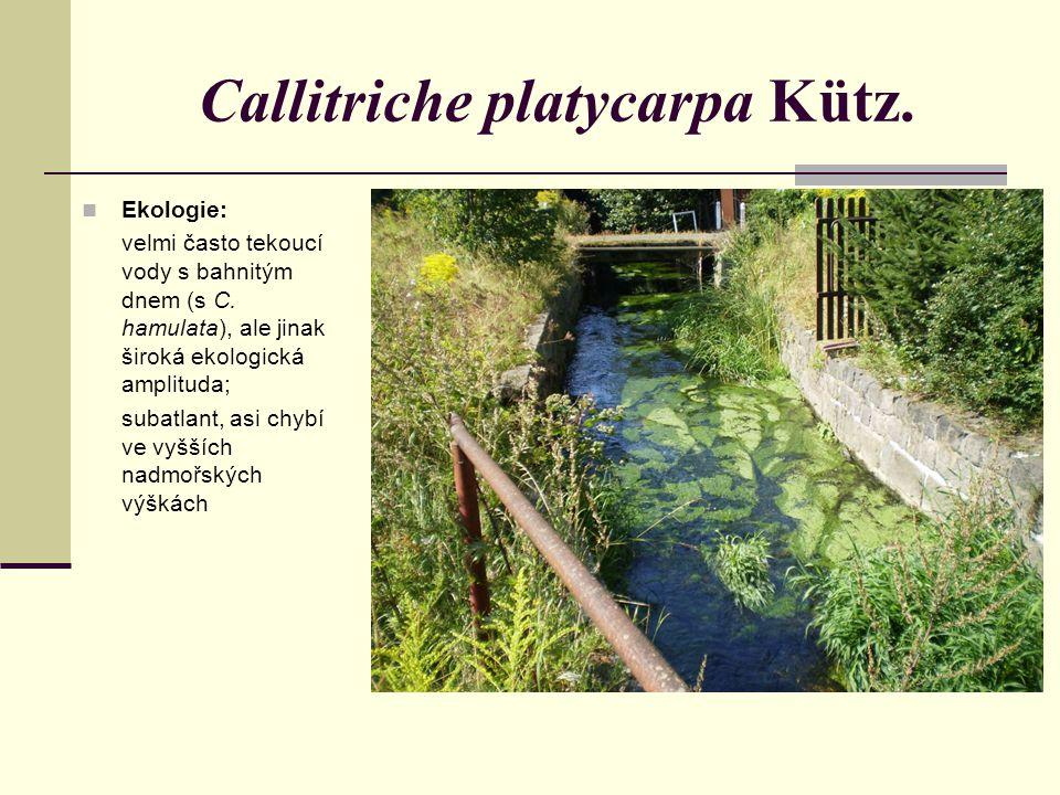 Ekologie: velmi často tekoucí vody s bahnitým dnem (s C. hamulata), ale jinak široká ekologická amplituda; subatlant, asi chybí ve vyšších nadmořských