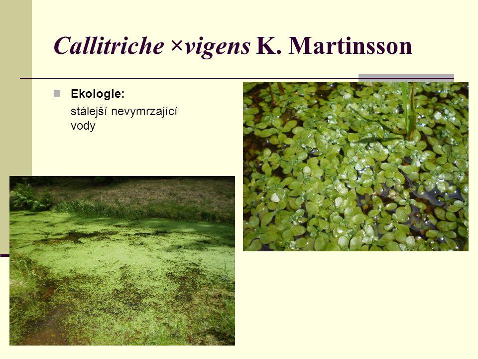 Ekologie: stálejší nevymrzající vody Callitriche ×vigens K. Martinsson