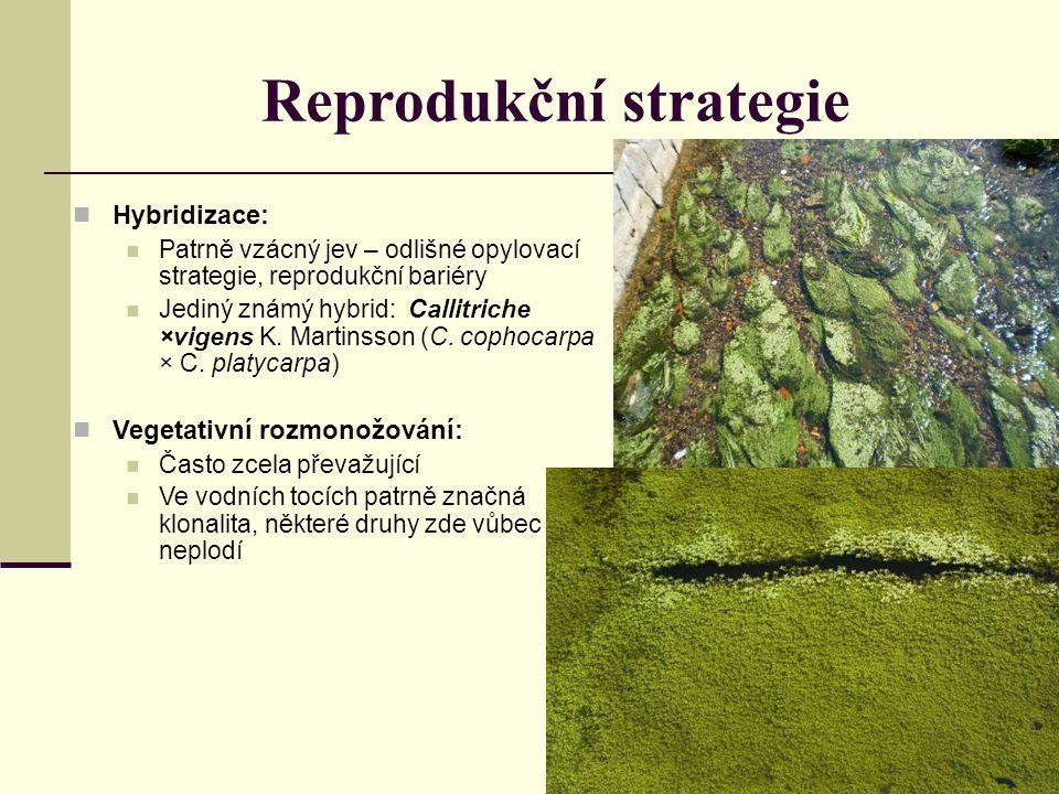 Hybridizace: Patrně vzácný jev – odlišné opylovací strategie, reprodukční bariéry Jediný známý hybrid: Callitriche ×vigens K. Martinsson (C. cophocarp