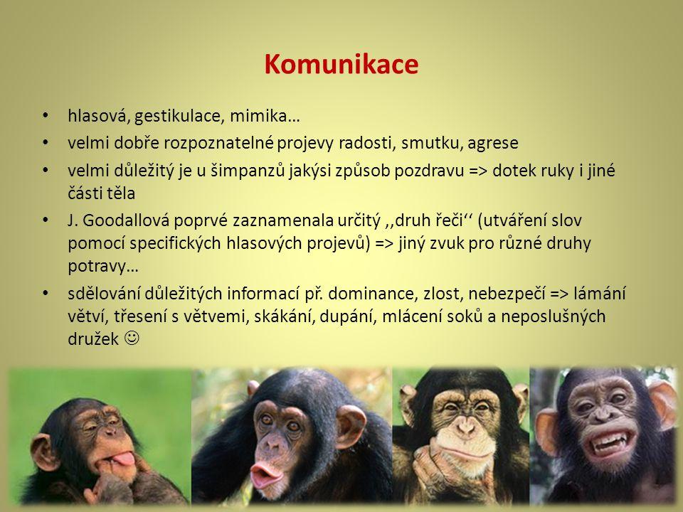 Komunikace hlasová, gestikulace, mimika… velmi dobře rozpoznatelné projevy radosti, smutku, agrese velmi důležitý je u šimpanzů jakýsi způsob pozdravu => dotek ruky i jiné části těla J.