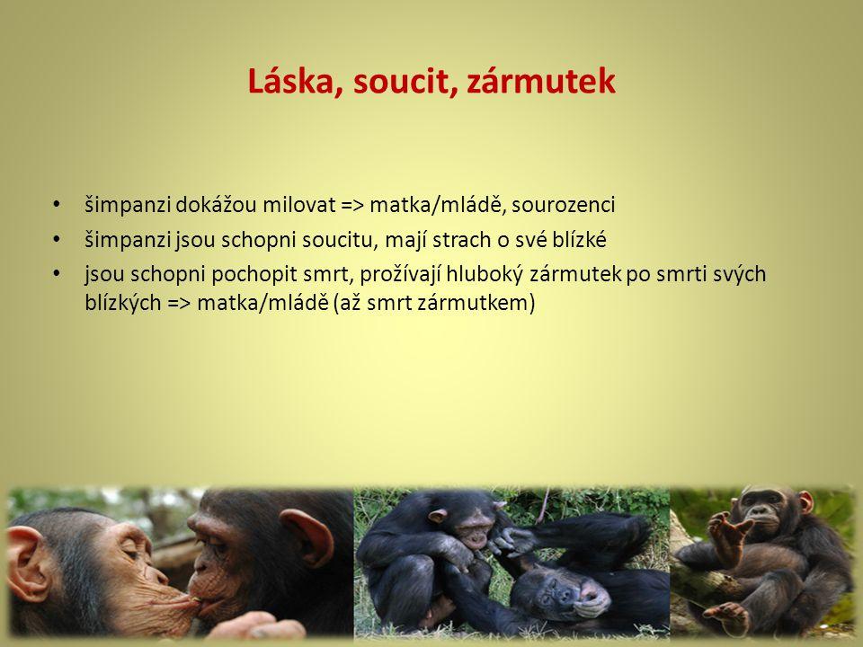 Láska, soucit, zármutek šimpanzi dokážou milovat => matka/mládě, sourozenci šimpanzi jsou schopni soucitu, mají strach o své blízké jsou schopni pochopit smrt, prožívají hluboký zármutek po smrti svých blízkých => matka/mládě (až smrt zármutkem)