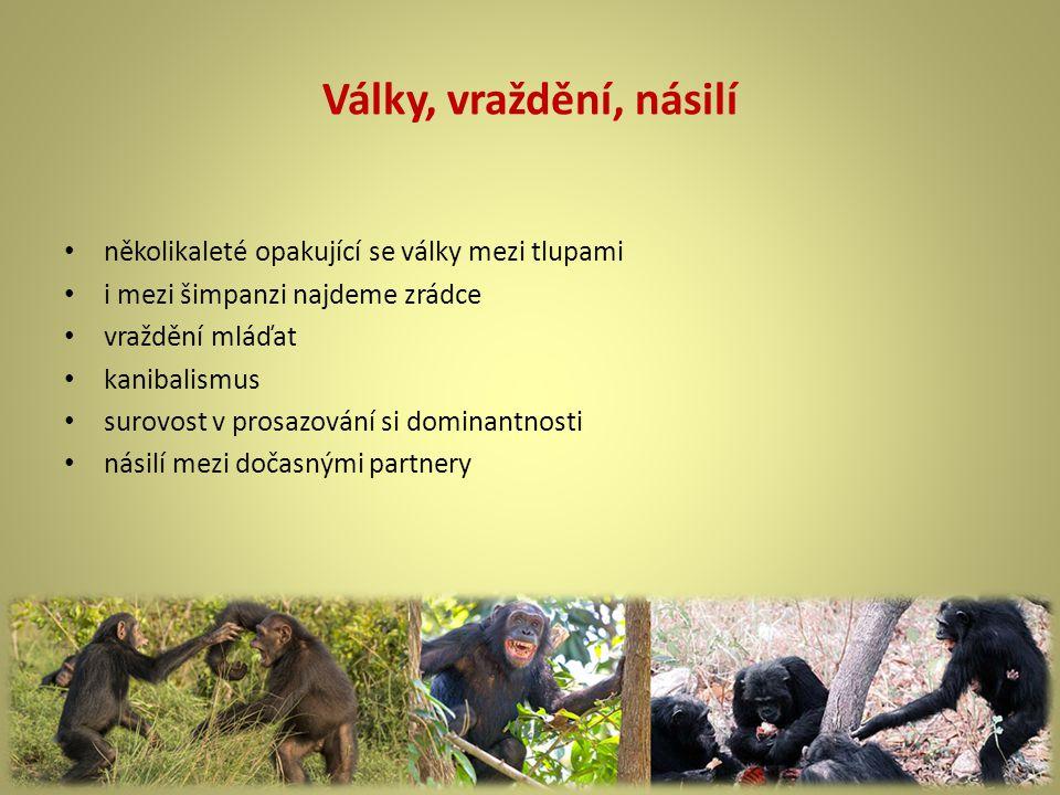 Války, vraždění, násilí několikaleté opakující se války mezi tlupami i mezi šimpanzi najdeme zrádce vraždění mláďat kanibalismus surovost v prosazování si dominantnosti násilí mezi dočasnými partnery