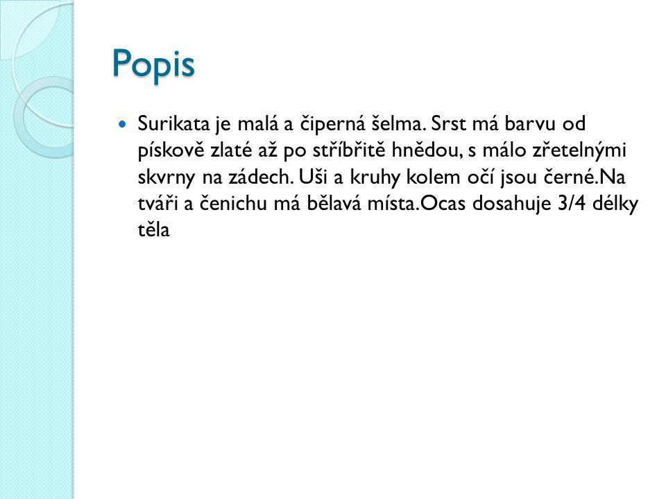Popis Surikata je malá a čiperná šelma.