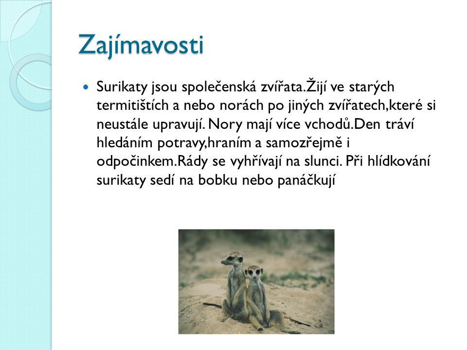 Zajímavosti Surikaty jsou společenská zvířata.Žijí ve starých termitištích a nebo norách po jiných zvířatech,které si neustále upravují. Nory mají víc
