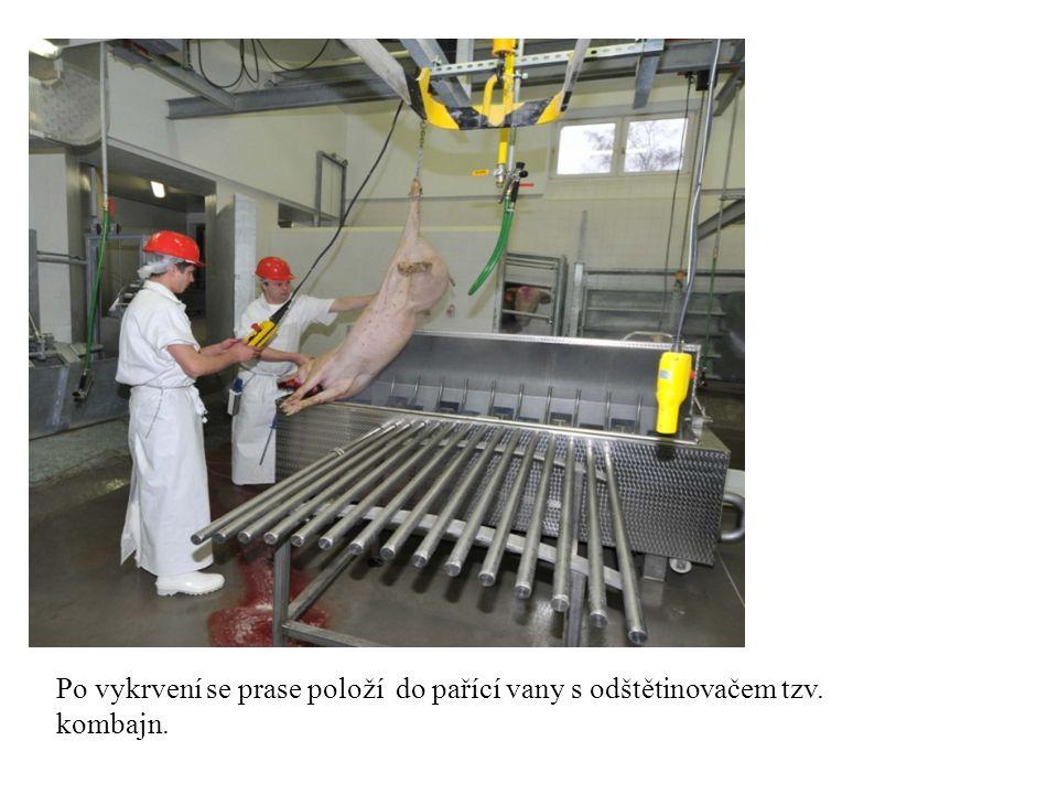Po vykrvení se prase položí do pařící vany s odštětinovačem tzv. kombajn.