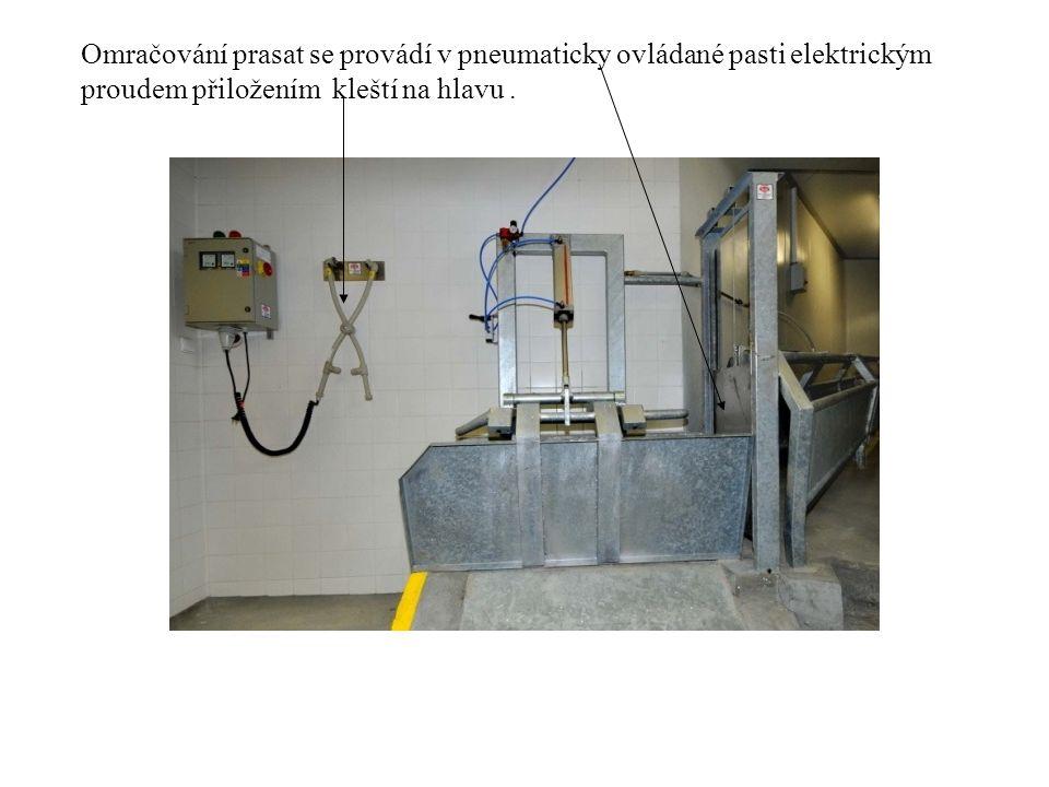 Omračování prasat se provádí v pneumaticky ovládané pasti elektrickým proudem přiložením kleští na hlavu.