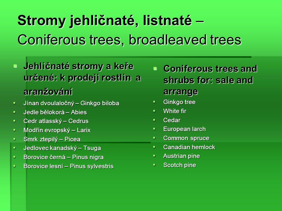 Stromy jehličnaté, listnaté – Coniferous trees, broadleaved trees  Jehličnaté stromy a keře určené: k prodeji rostlin a aranžování  Jínan dvoulaločný – Ginkgo biloba  Jedle bělokorá – Abies  Cedr atlasský – Cedrus  Modřín evropský – Larix  Smrk ztepilý – Picea  Jedlovec kanadský – Tsuga  Borovice černá – Pinus nigra  Borovice lesní – Pinus sylvestris  Coniferous trees and shrubs for: sale and arrange  Ginkgo tree  White fir  Cedar  European larch  Common spruce  Canadian hemlock  Austrian pine  Scotch pine