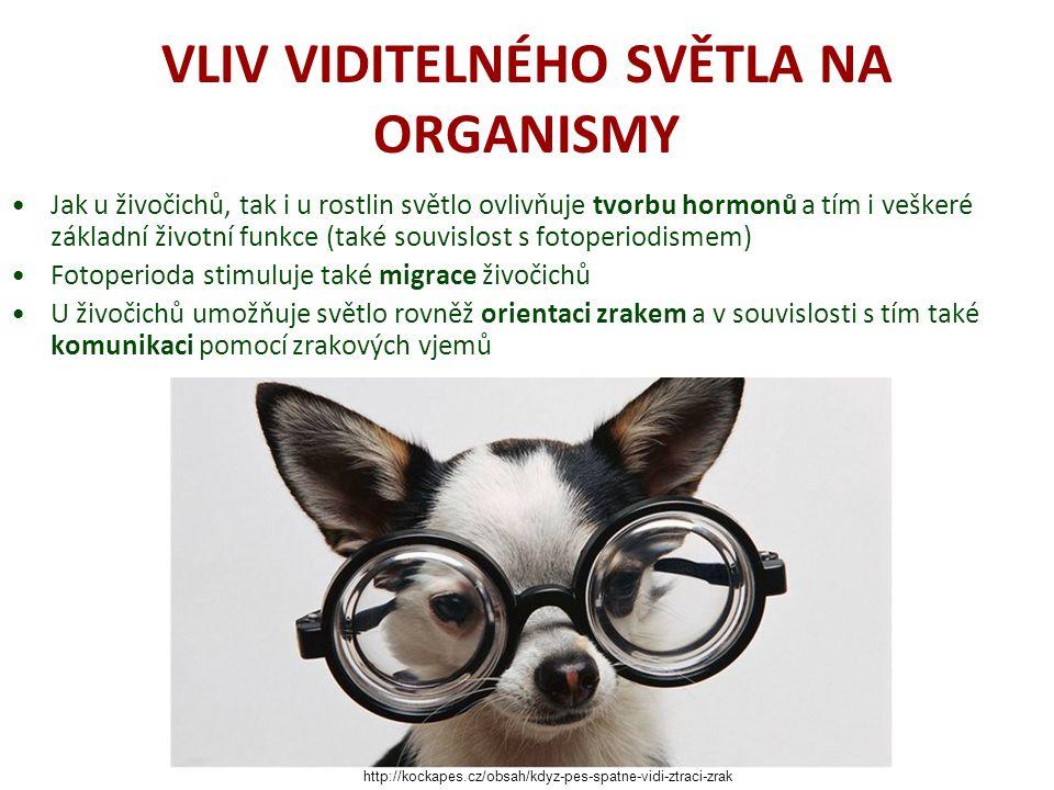 VLIV VIDITELNÉHO SVĚTLA NA ORGANISMY Jak u živočichů, tak i u rostlin světlo ovlivňuje tvorbu hormonů a tím i veškeré základní životní funkce (také so