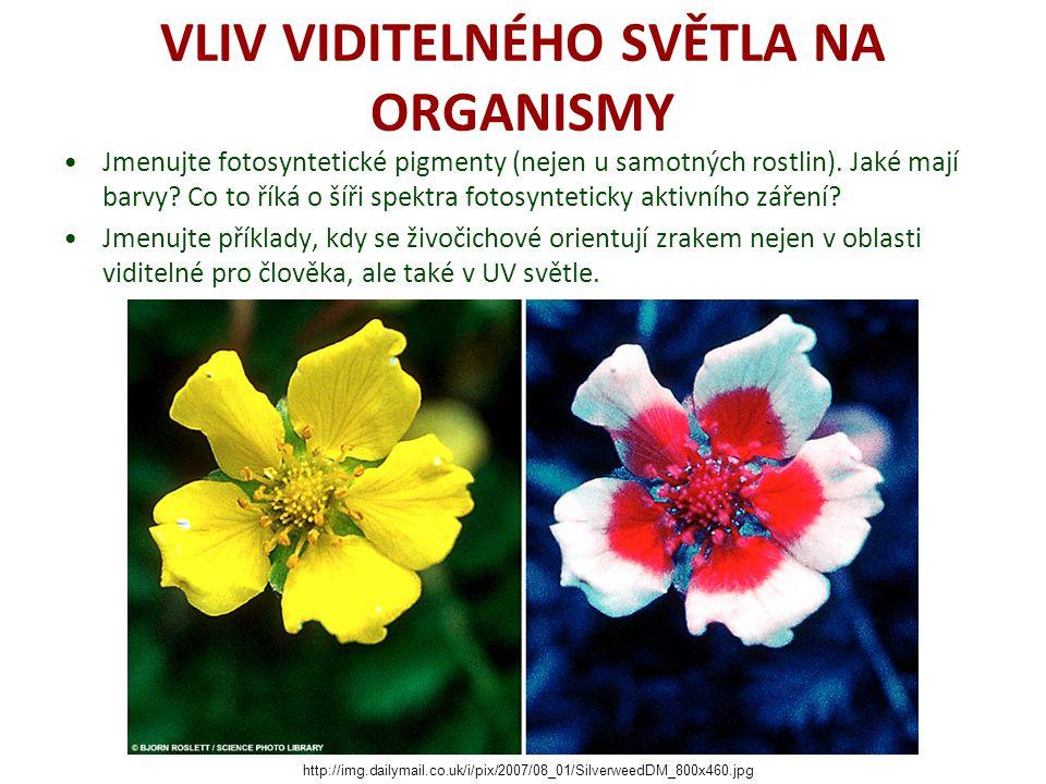 VLIV VIDITELNÉHO SVĚTLA NA ORGANISMY Jmenujte fotosyntetické pigmenty (nejen u samotných rostlin). Jaké mají barvy? Co to říká o šíři spektra fotosynt