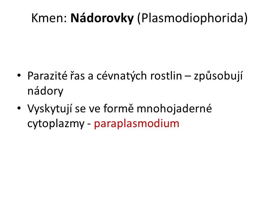 Kmen: Nádorovky (Plasmodiophorida) Parazité řas a cévnatých rostlin – způsobují nádory Vyskytují se ve formě mnohojaderné cytoplazmy - paraplasmodium